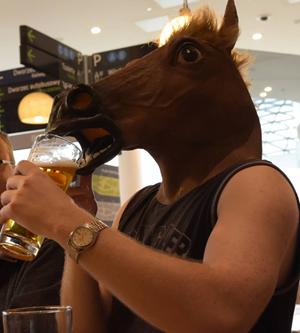 Koń pjie piwo